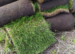 Живой газон в рулонах